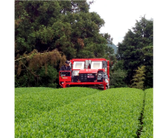 茶園および生産管理
